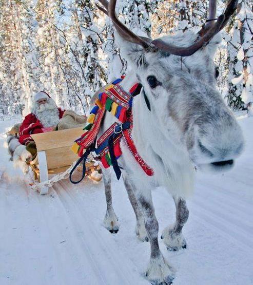 reindeer_10