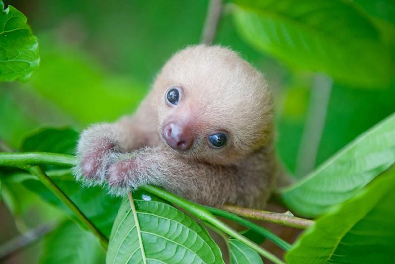 small sloth_10