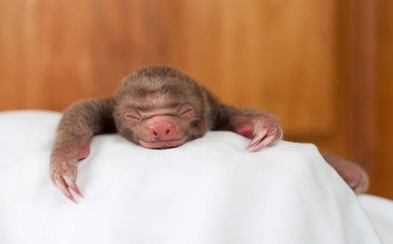 small sloth_11