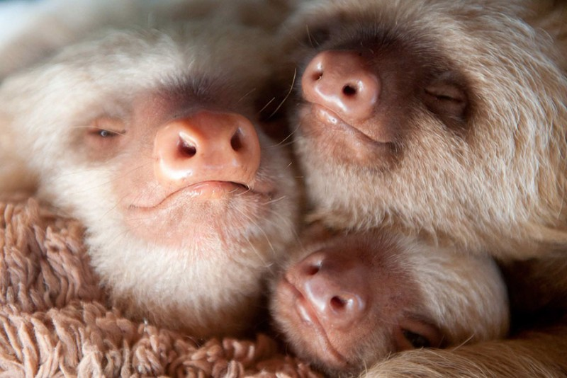 small sloth_12