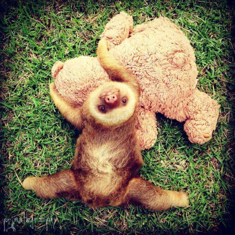 small sloth_14