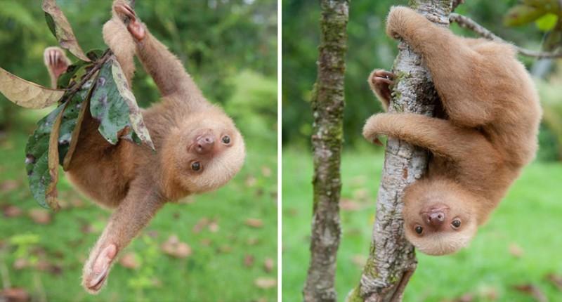 small sloth_2
