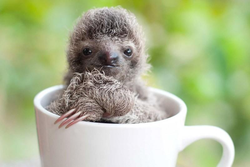 small sloth_3