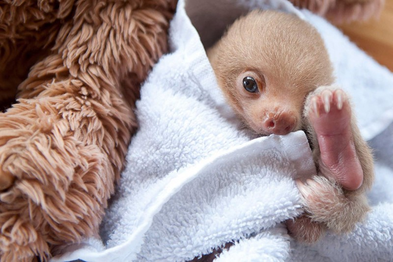 small sloth_4