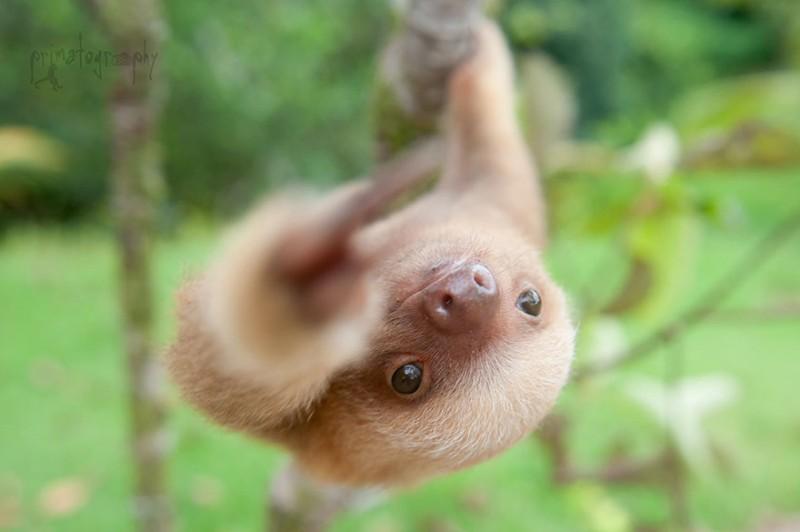small sloth_5