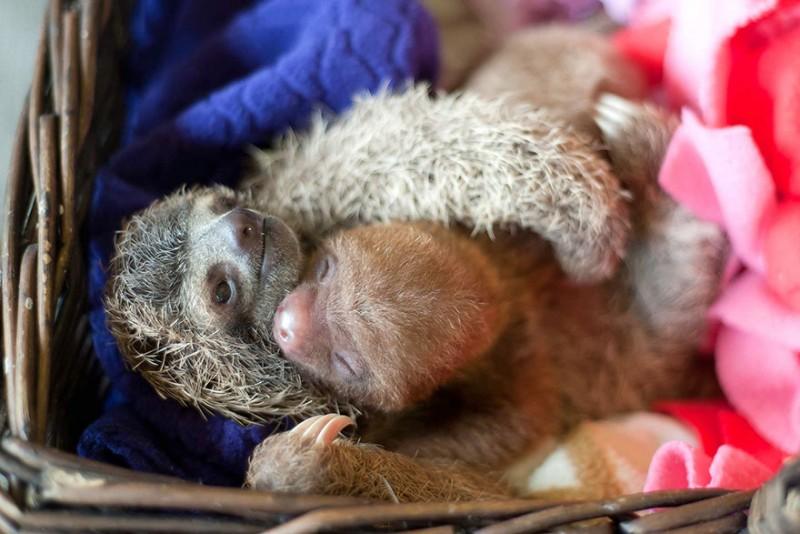 small sloth_6