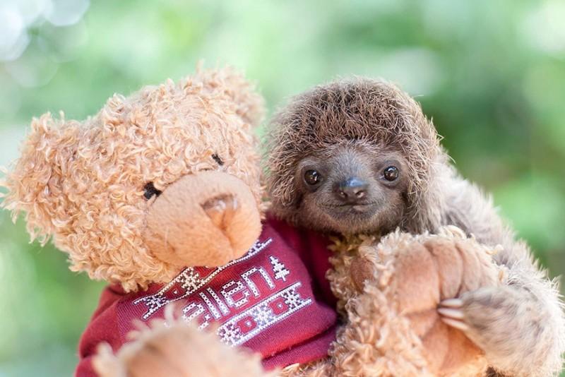 small sloth_7