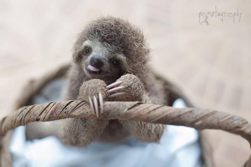 small sloth_8