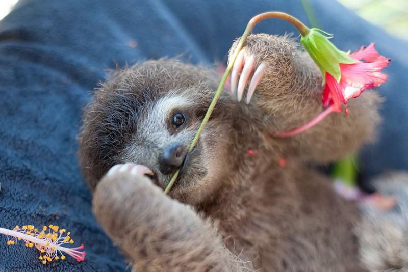 small sloth_9