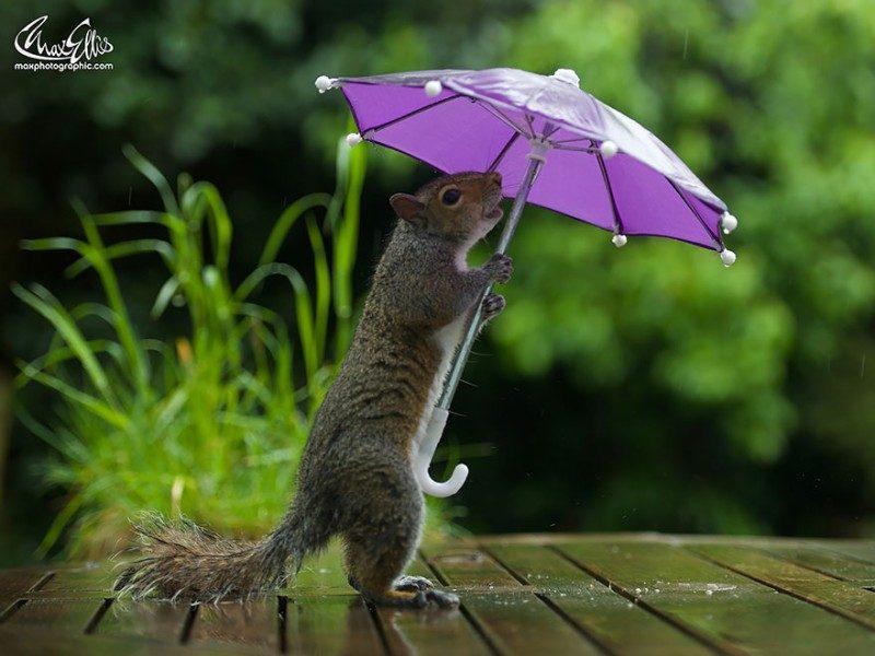 squirrel-umbrella-rain-squirrelisimo-max-ellis-1