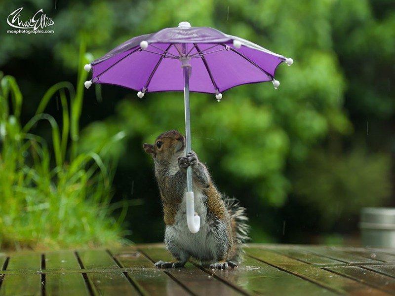 squirrel-umbrella-rain-squirrelisimo-max-ellis-4