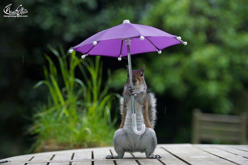 squirrel-umbrella-rain-squirrelisimo-max-ellis-5