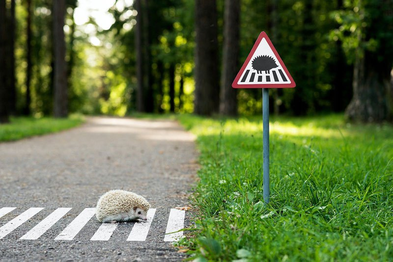 tiny-road-signs-erected-to-remind-city-residents-animals-live-there-too-by-clinic-212-3