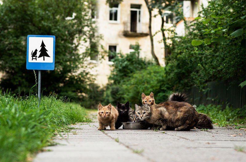 tiny-road-signs-erected-to-remind-city-residents-animals-live-there-too-by-clinic-212-6
