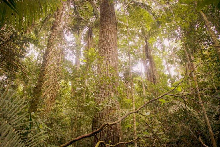 trees in the Amazon rainforest